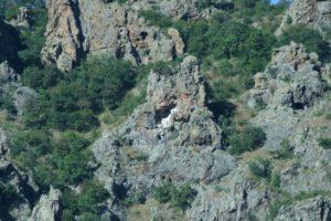 Madzharovo Vulture Reserve